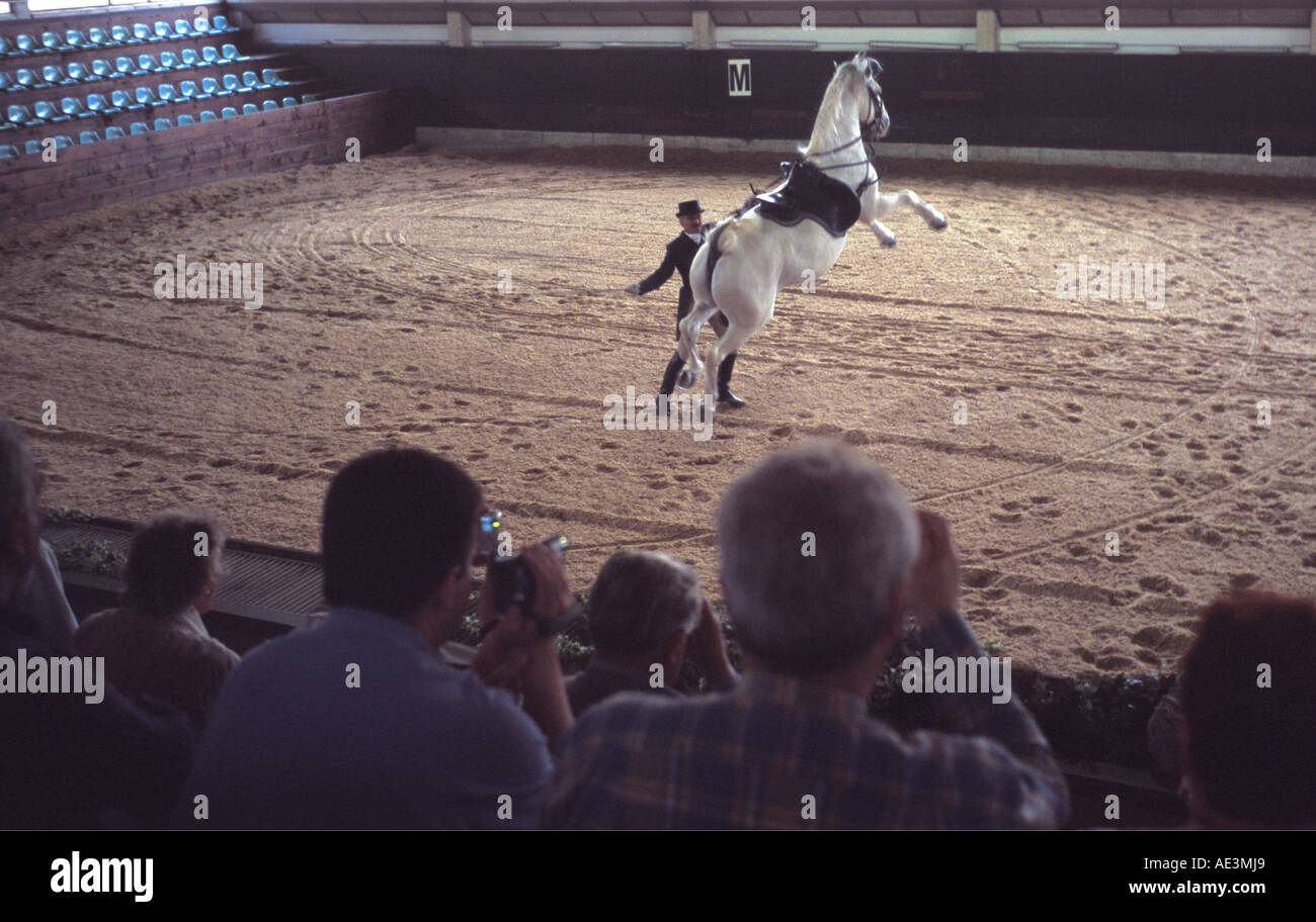Lipizzaner in dressage display show at the Lipica stud farm in Slovenia watched by the public - Stock Image