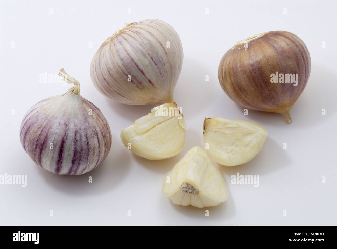 Elephant Garlic, Russian Garlic (Allium ampeloprasum), bulbs, studio picture - Stock Image