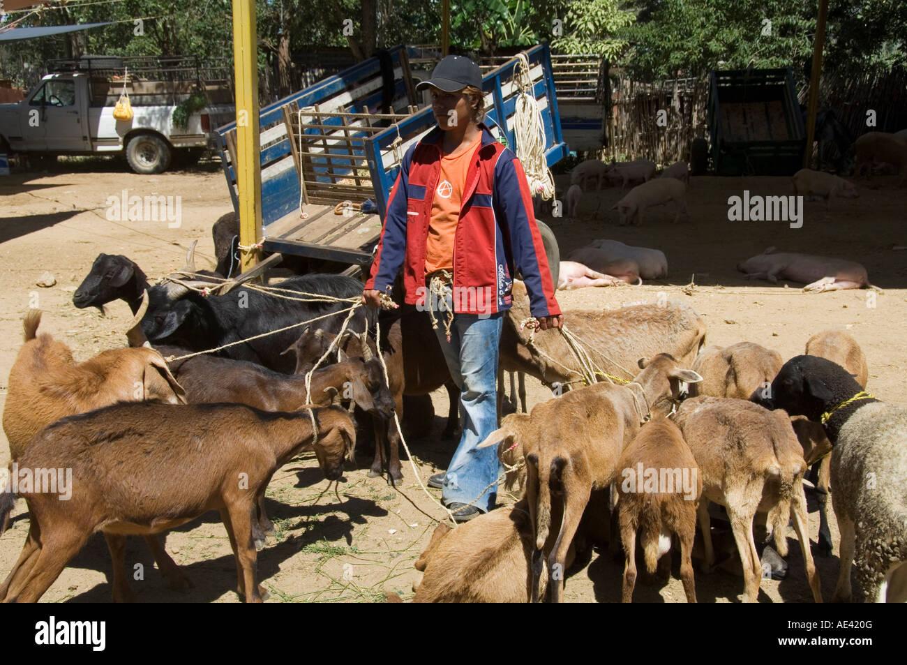 f34db7bdad Livestock market