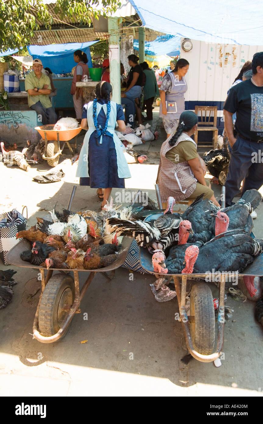 0db28d68df Turkeys for sale in the market