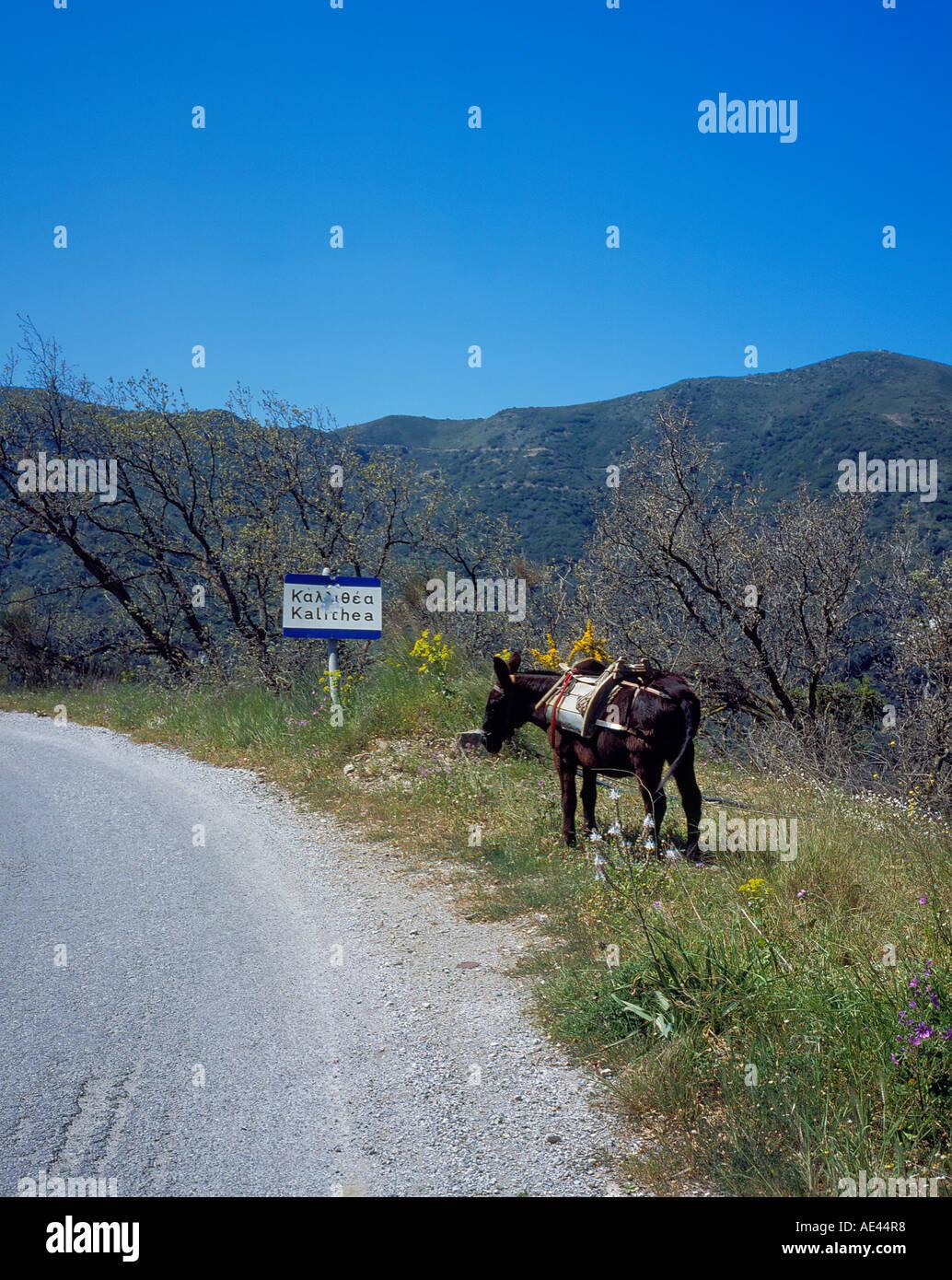 roadside donkey Crete, Greece, Europe.  Photo by Willy Matheisl Stock Photo