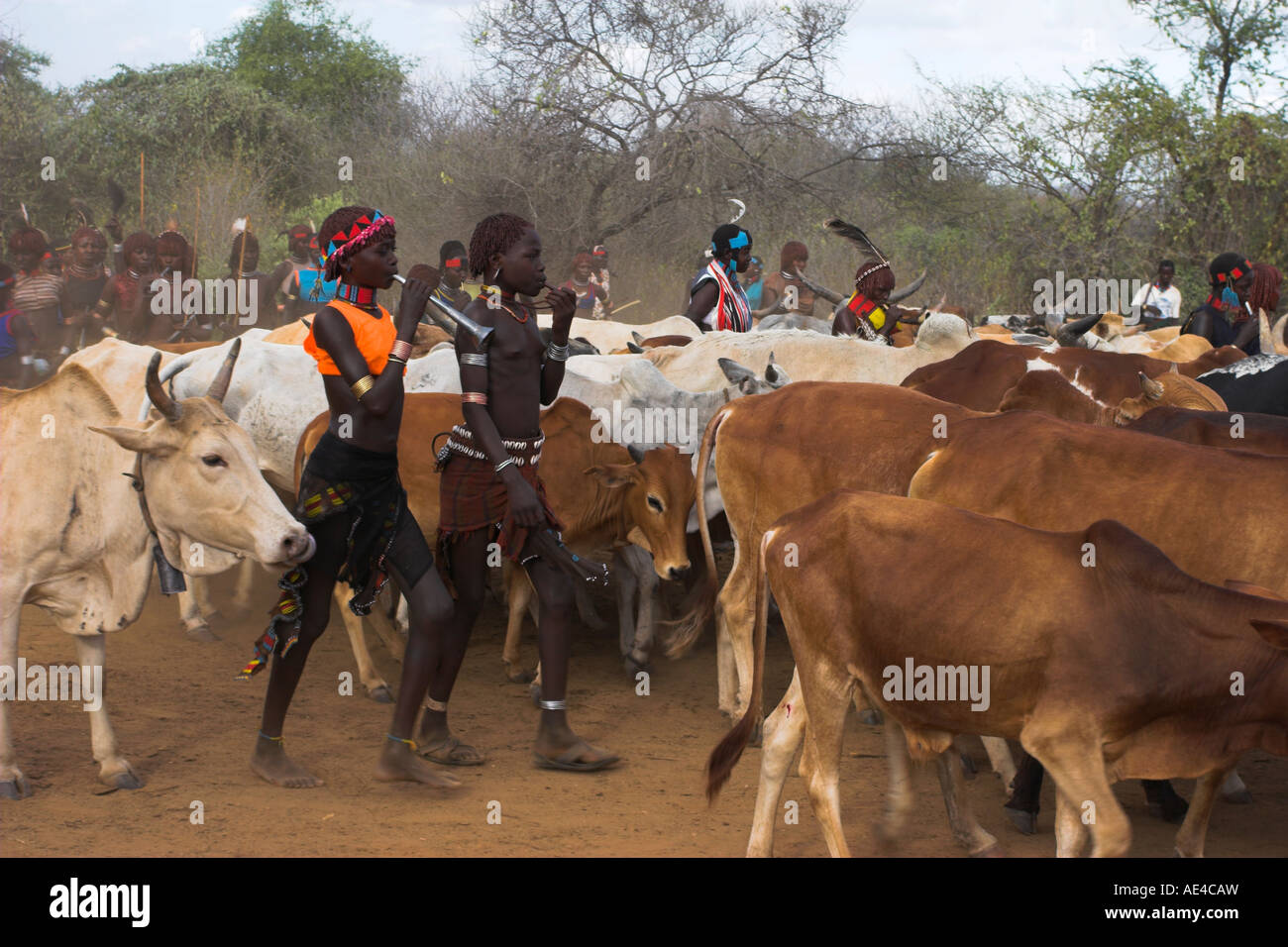 Ritual dancing, Jumping of the Bulls initiation ceremony of the Hamer (Hamar) people, Turmi, Lower Omo Valley, Ethiopia, Stock Photo