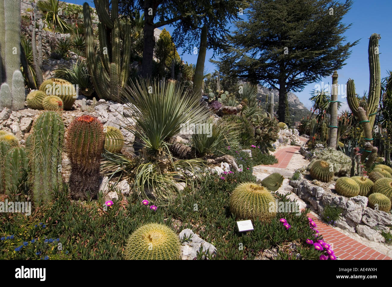 Photo Petit Jardin Exotique botanic garden (jardin exotique), eze village, alpes
