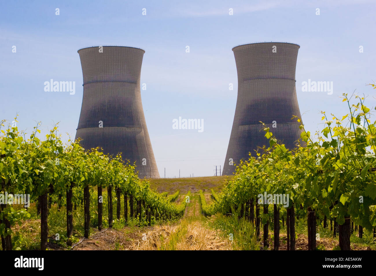 Cooling towers at Rancho Seco decommissioned nuclear power plant with rows of grapes growing in vineyard surrounding - Stock Image
