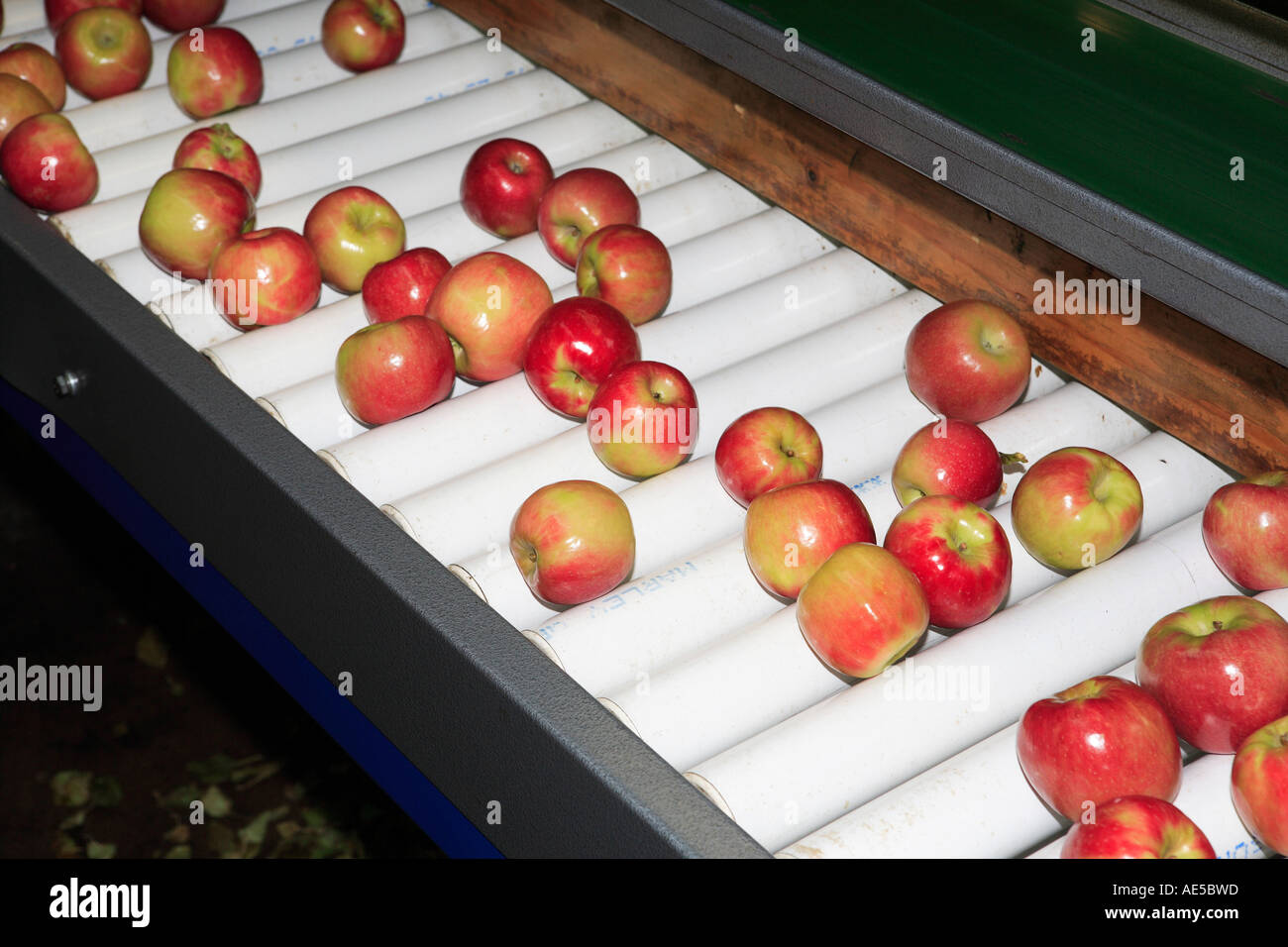 Xvr27's apples to apples page official rules junior 9+ (first.