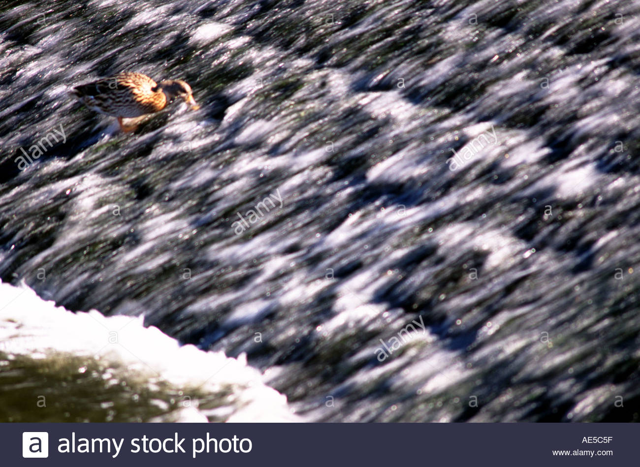 Life on a river medway weir United Kingdom Stock Photo