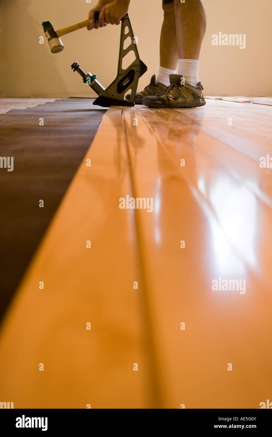 Man installing hardwood floor hitting a floor nailer with rubber mallet to put a plank of maple hardwood flooring - Stock Image
