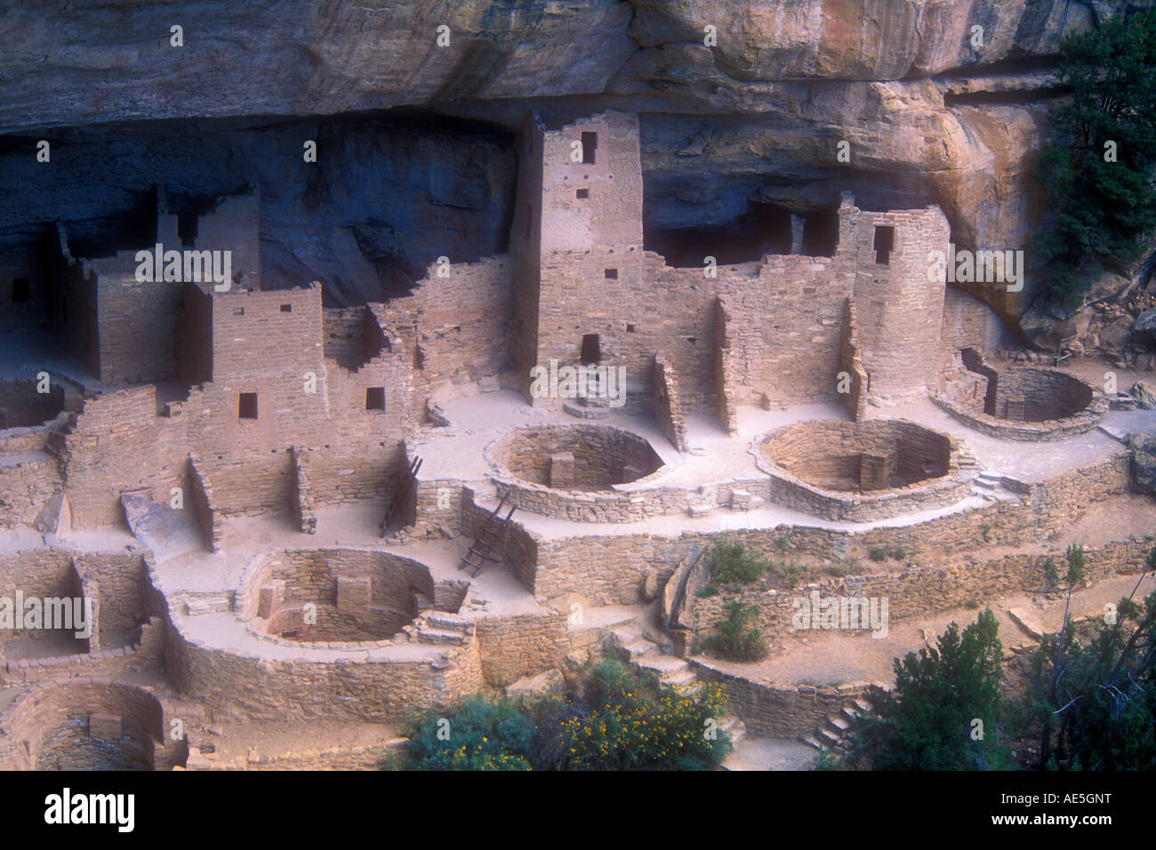 Cliff Palace ancient stone ruins and kivas in village built into cliff by Anasazi Ancestral Puebloans Indians - Stock Image