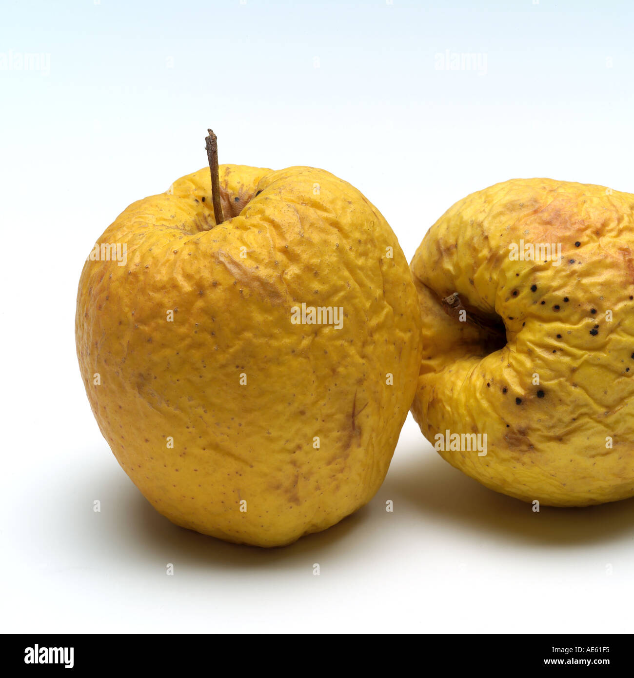 Two wrinkled Golden Delicious apples - Stock Image
