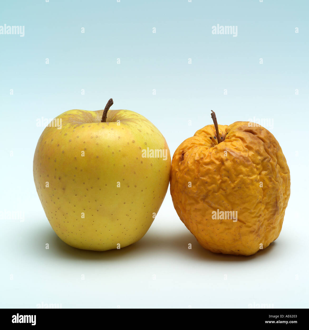 One fresh and one wrinkled Golden Delicious apples, bad skin concept - Stock Image