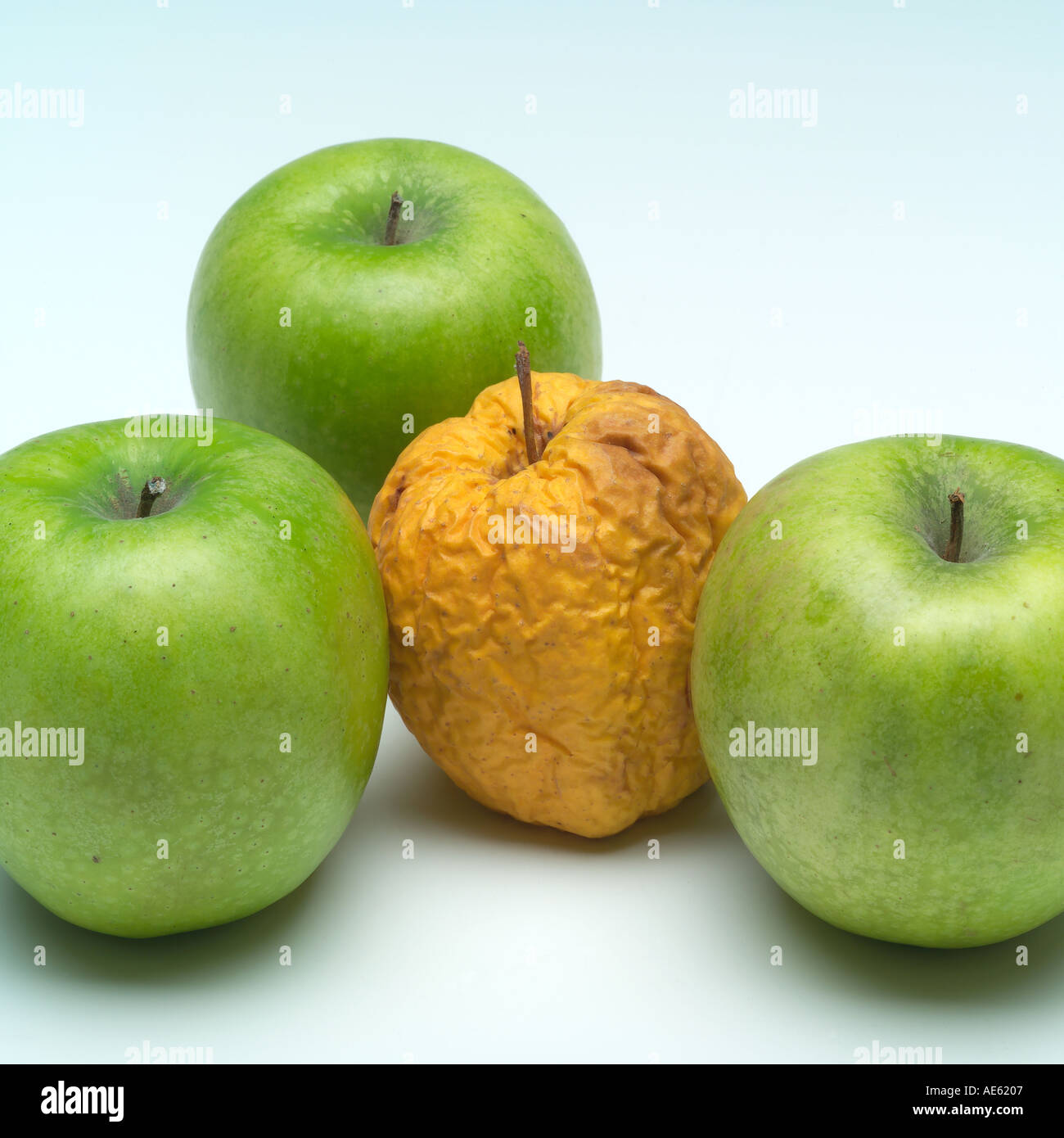 Three fresh Granny Smith and one wrinkled Golden Delicious apples - Stock Image