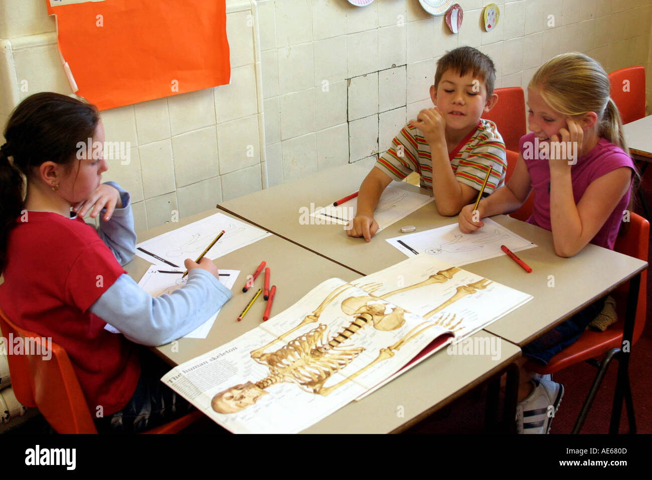 Primary school children 7 to 8 year old in anatomy class - Stock Image