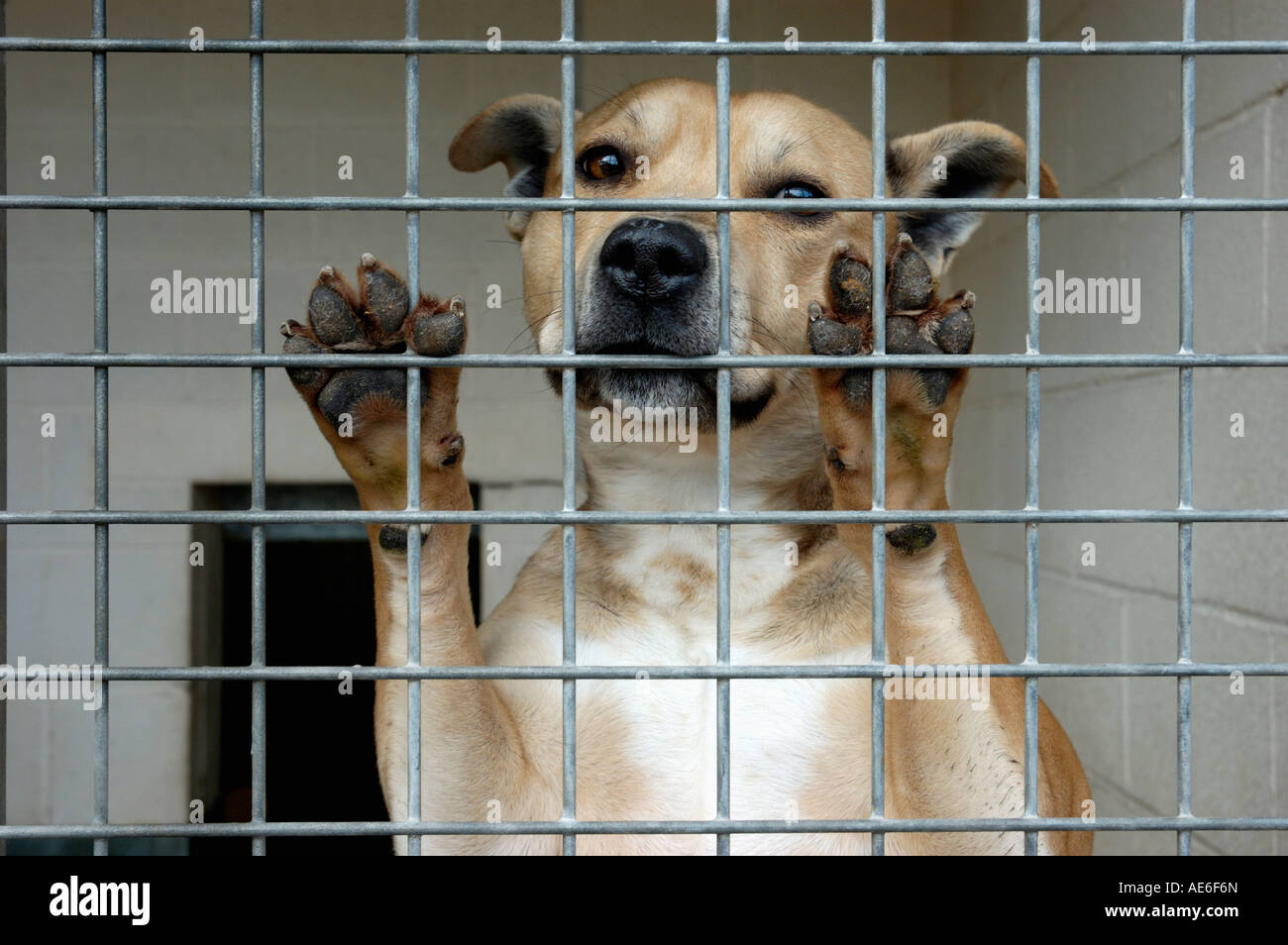 Unwanted dogs left at RSPCA kennels - Stock Image