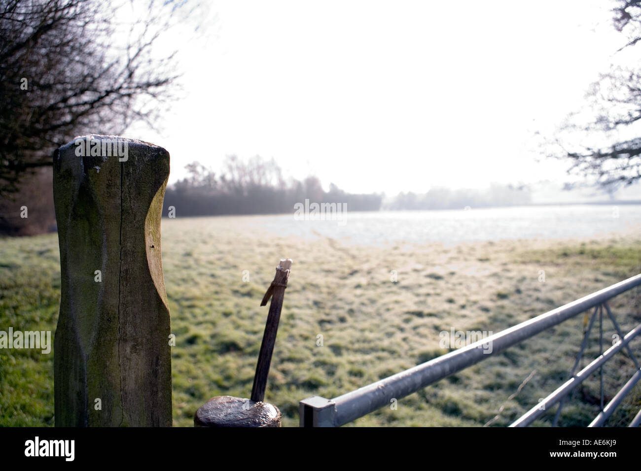 Frost covered gatepost and latch farmland Somerset Frost covered gate post gatepost cold winter day crisp bleak bleakness lonely - Stock Image