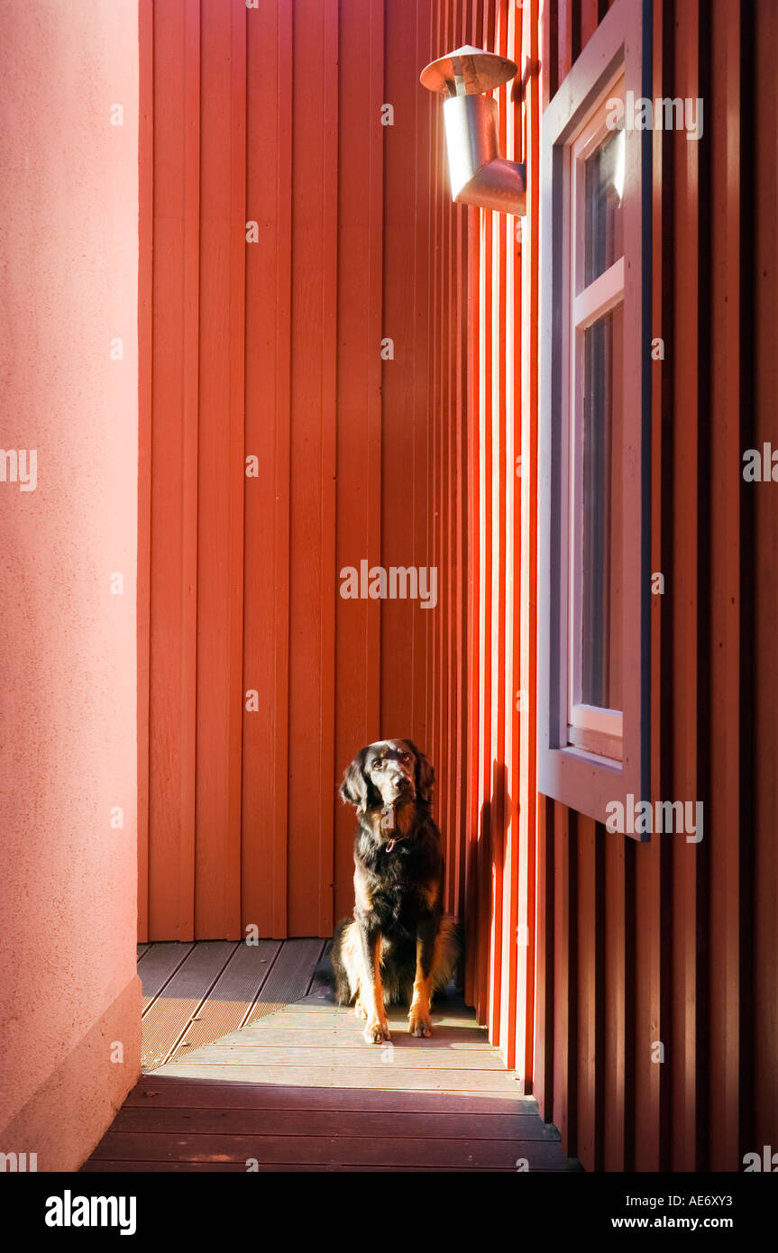 dog sitting outside a modern red house - Stock Image