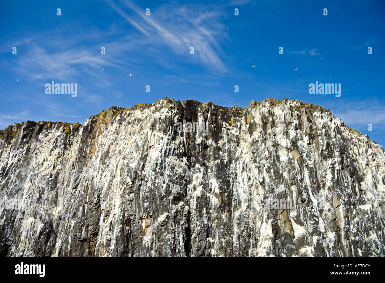Bird droppings covering the cliffs of the Isle of May Firth of Forth Scotland - Stock Image