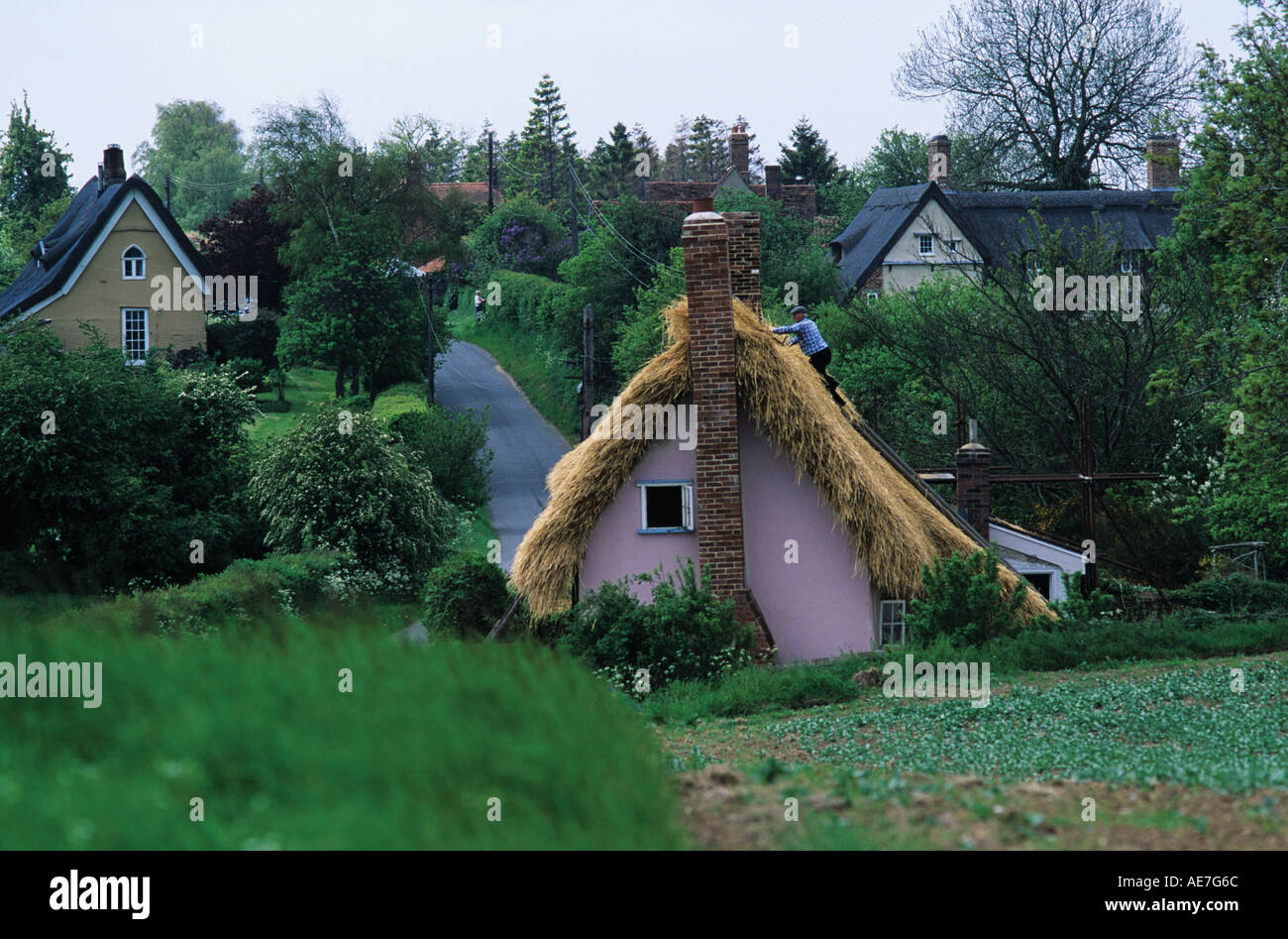Traditional thatch roof on refurbished cottage nearing completion village of Lindsey Suffolk Stock Photo