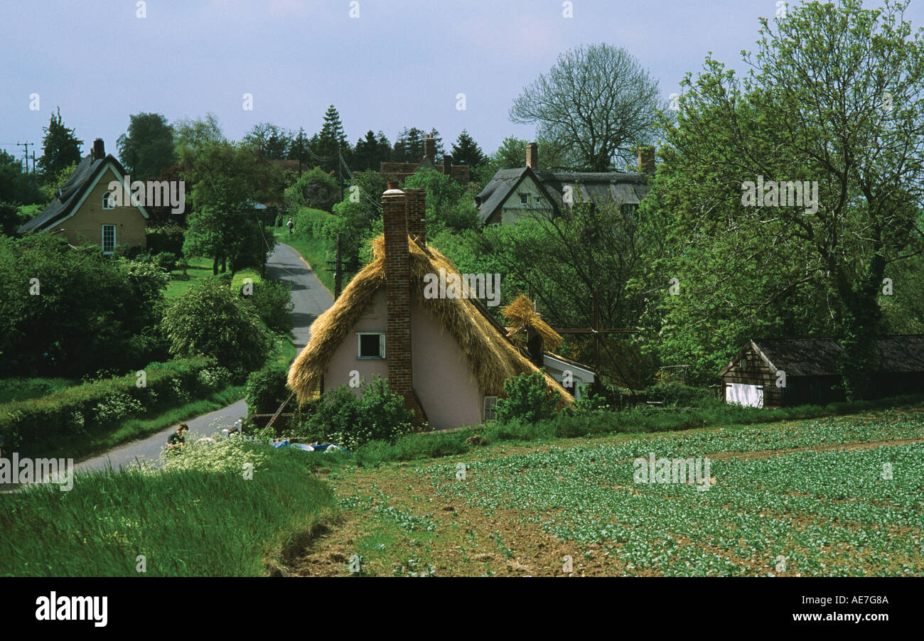 Thatching a traditional rural cottage in the Suffolk village of Lindsey - Stock Image