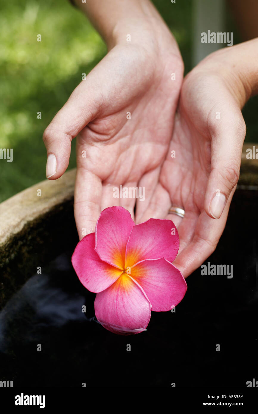 Hands Holding Pink Magnolia Flower Of Still Water Stock Photo