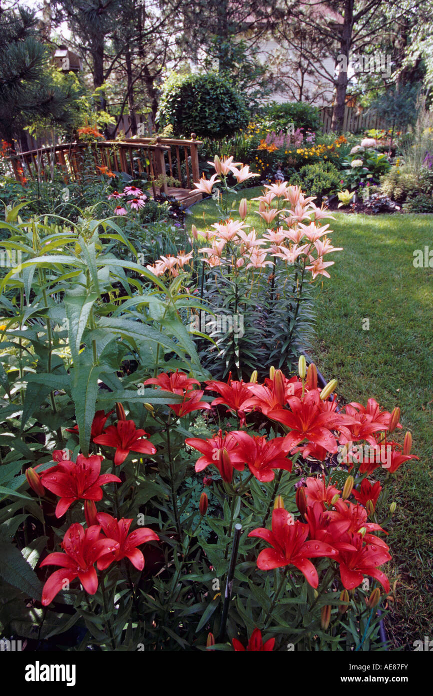 Asiatic Lilies And Cup And Saucer Plant In Minnesota Garden July