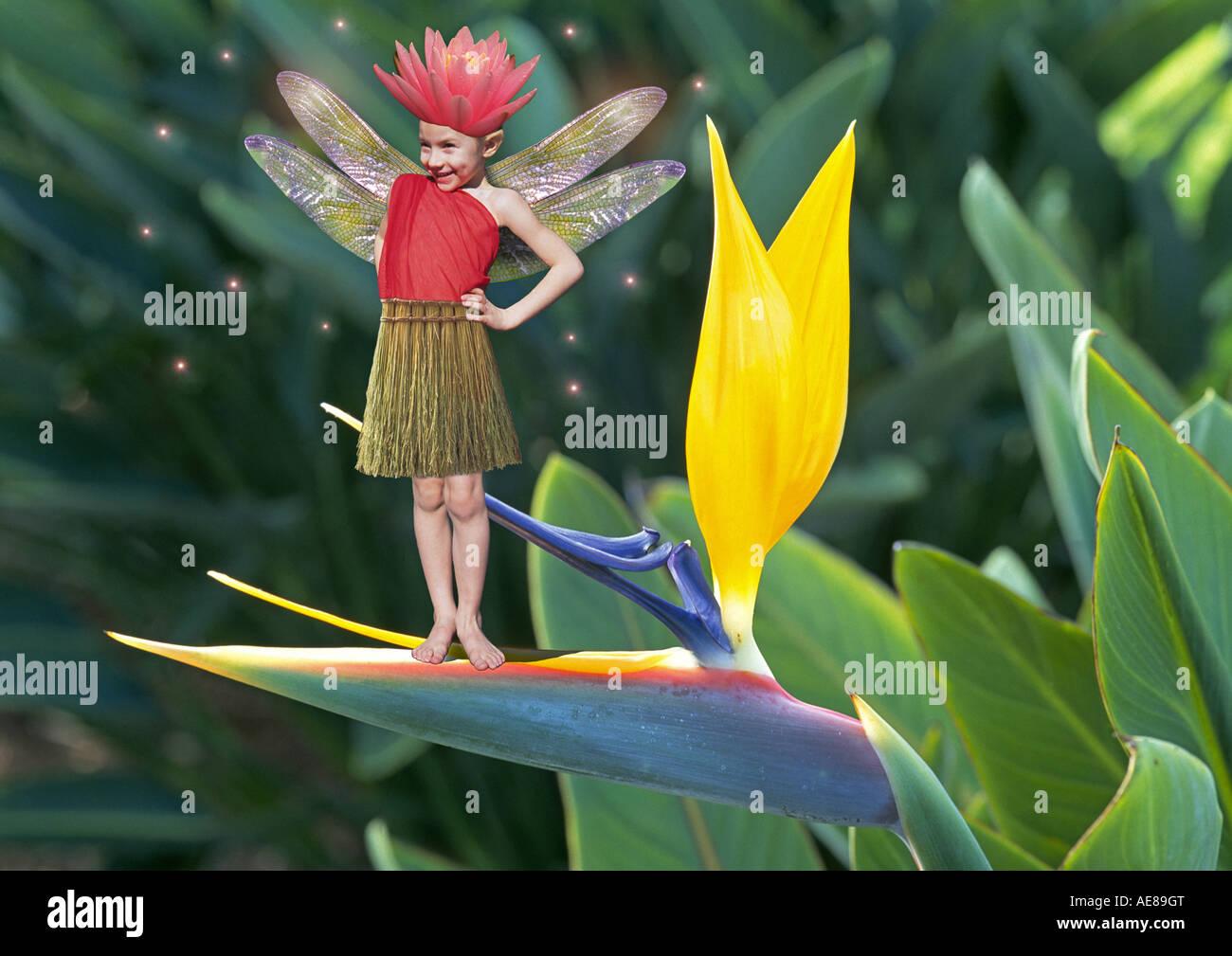 A flower fairy on a bird of paradise - Stock Image