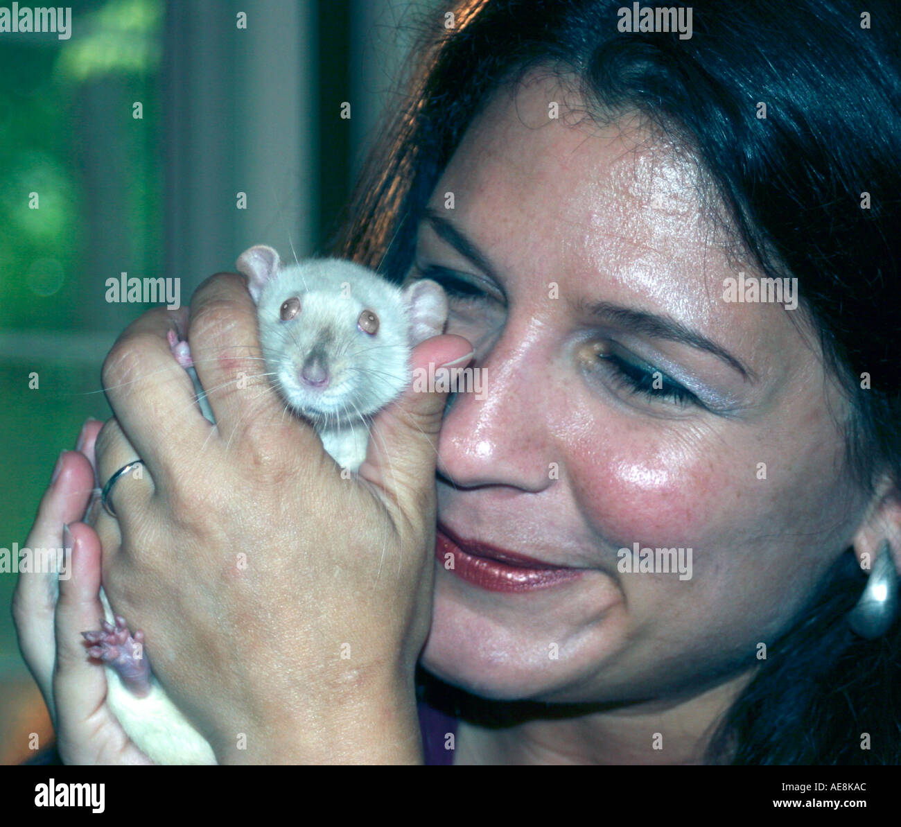 Pretty lady with pet white rat snuggled to face, domesticaed rattie, collectible, pink eyes, pink nose, unusual pet - Stock Image