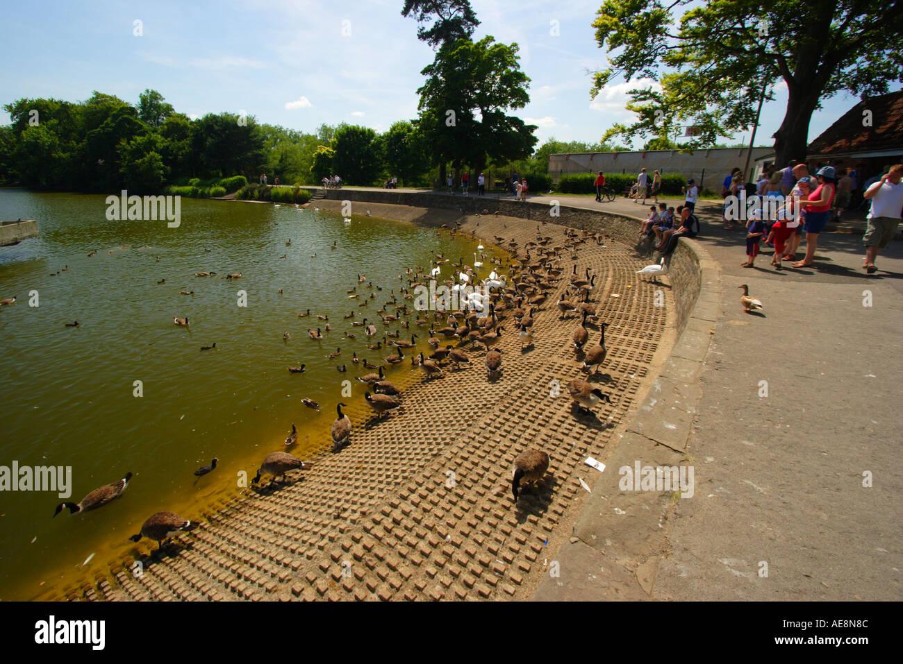 Magnificent Busch Gardens Water Country Elaboration - Brown Nature ...