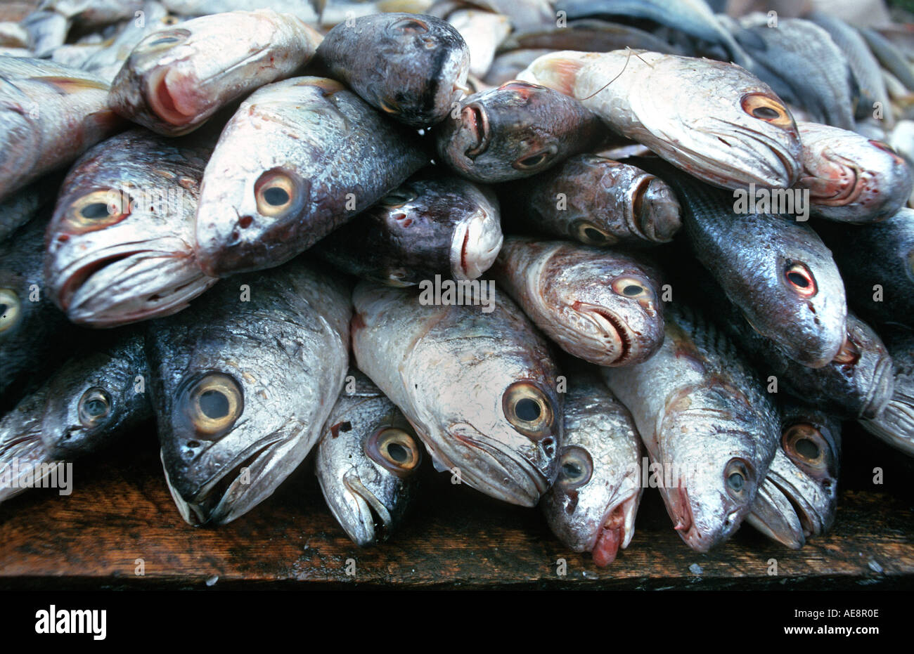 Fresh fish for sale on an Ecuadorean market stall Bucay Ecuador - Stock Image