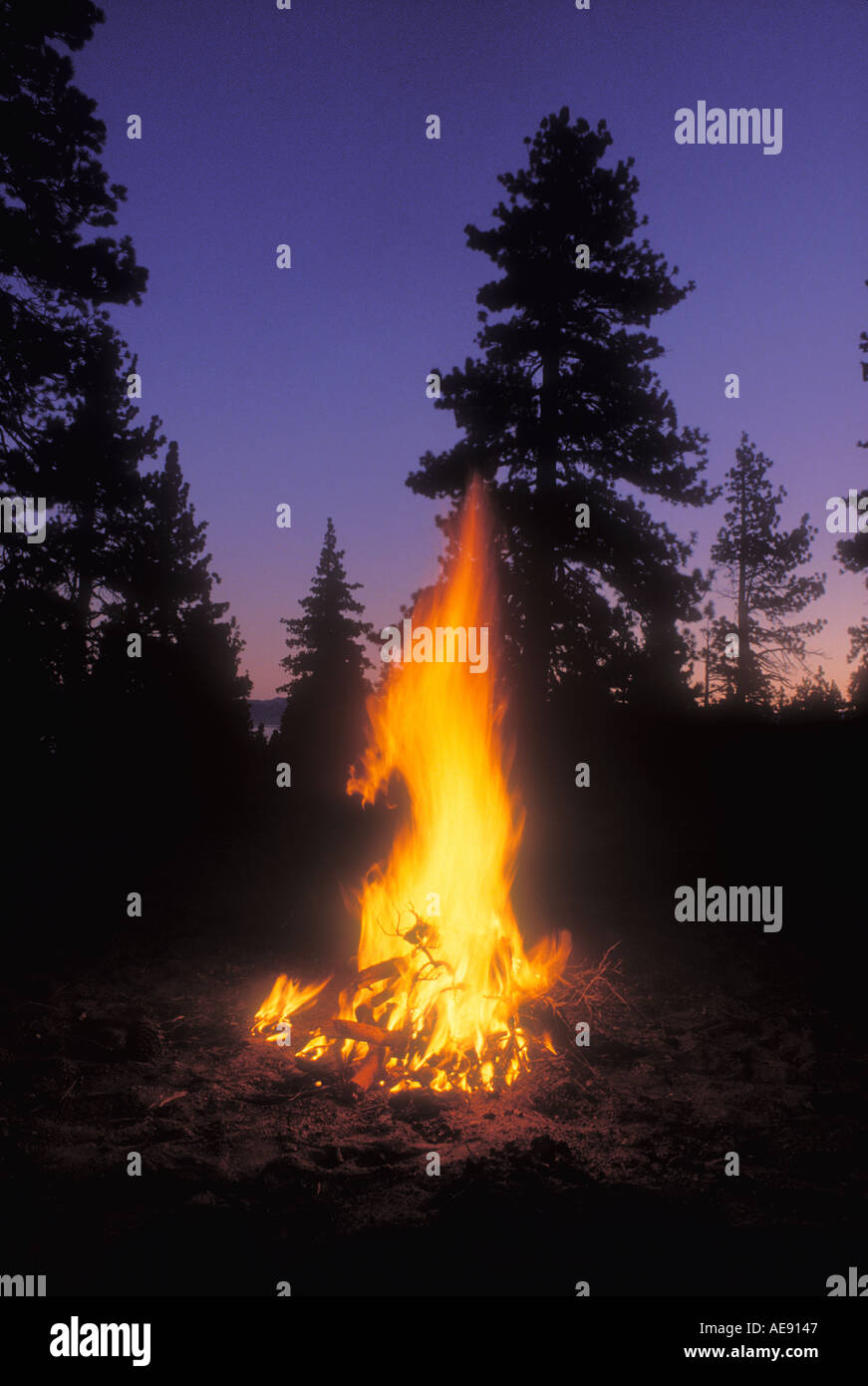 Evening fire surrounded by pine trees in forest - Stock Image