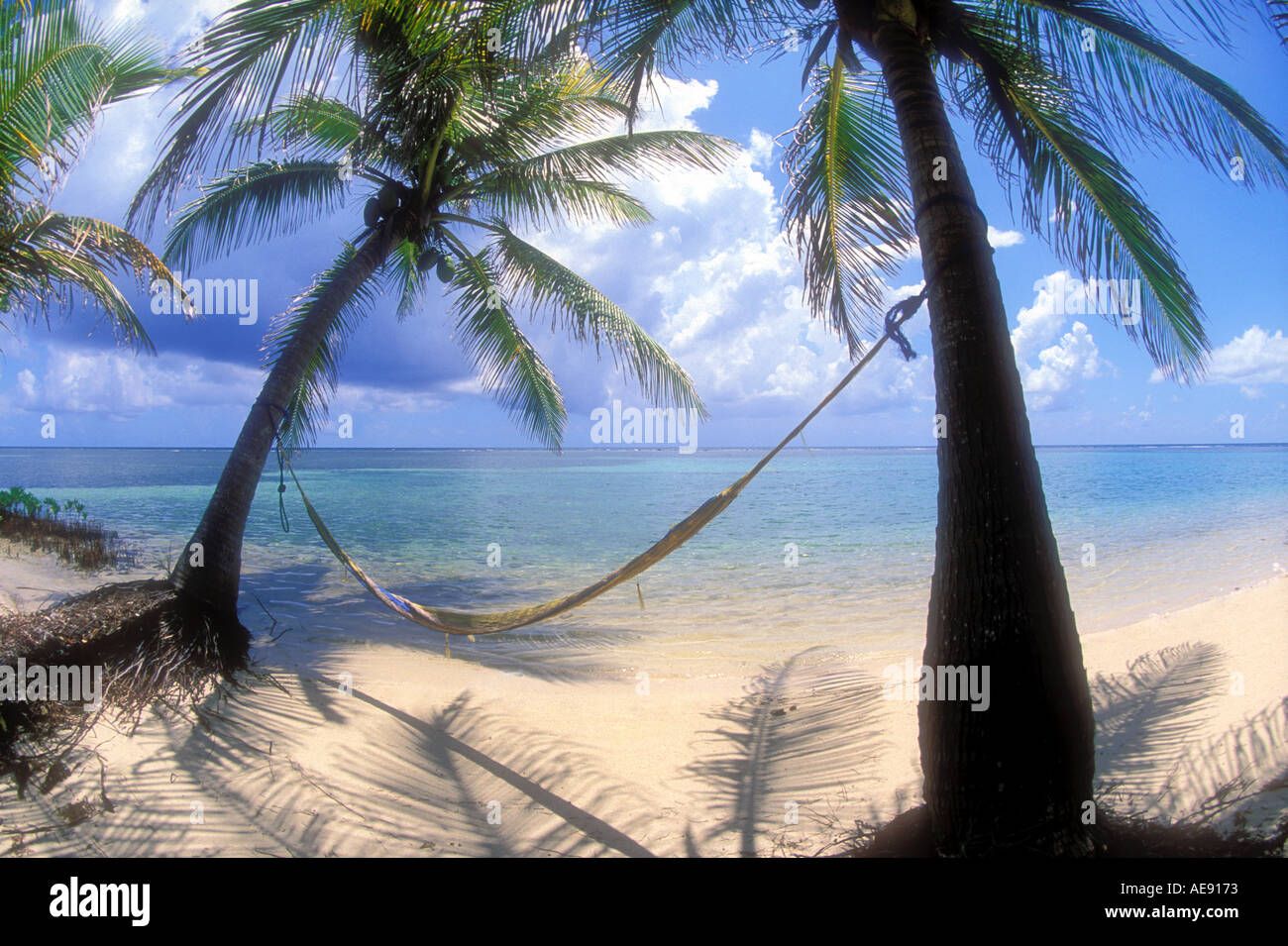Hammock swinging between two coconut palm trees in Belize Caribbean - Stock Image