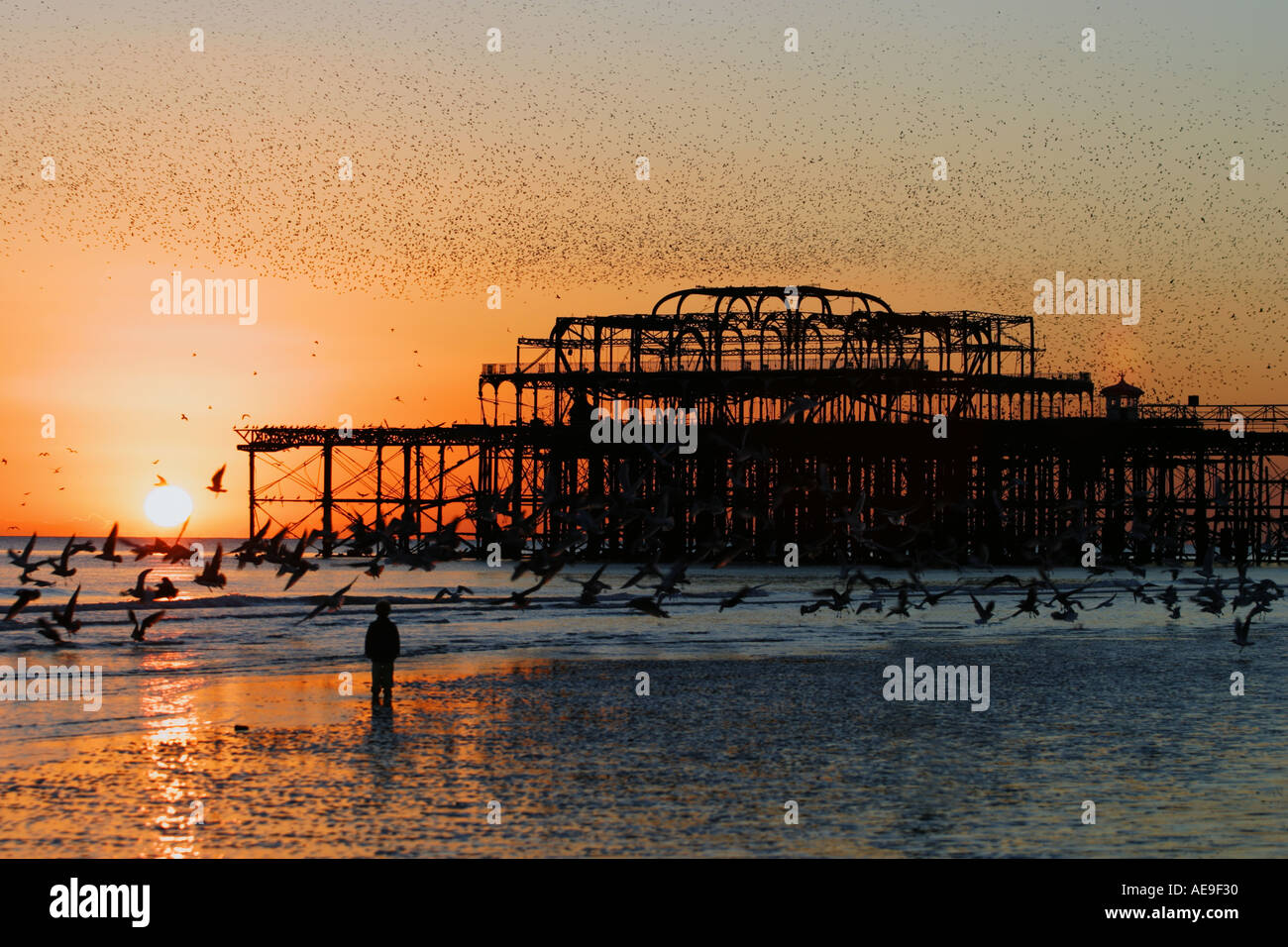 Night flight of starlings over West Pier Brighton Sussex at sunset Stock Photo