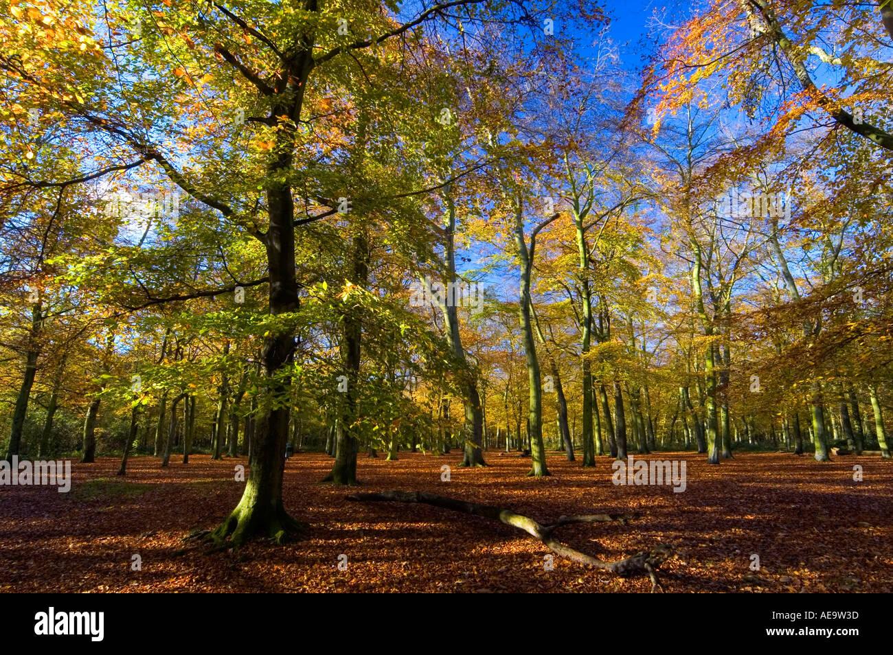 Keston woods
