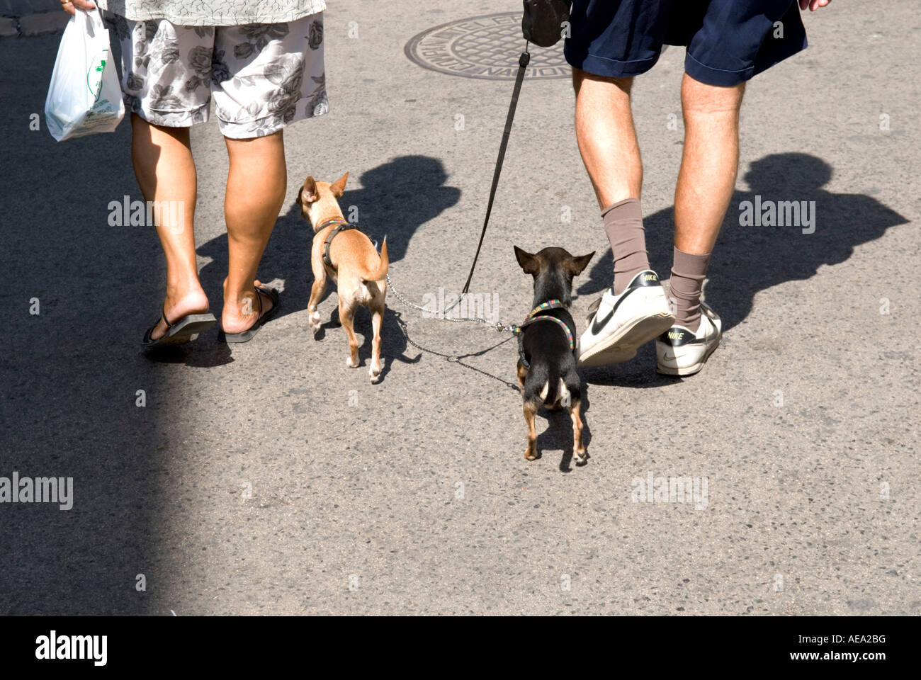 a cropped view of two peoples legs and their small dogs following on leads - Stock Image