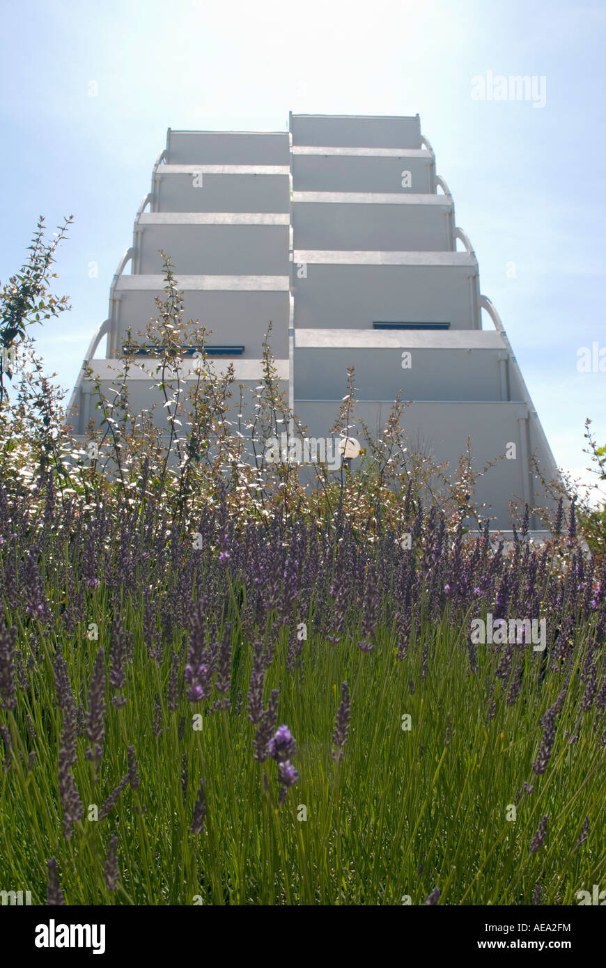 a low angle shot of some futuristic summer holiday flats with lavender bed in foreground in la grand motte, france - Stock Image