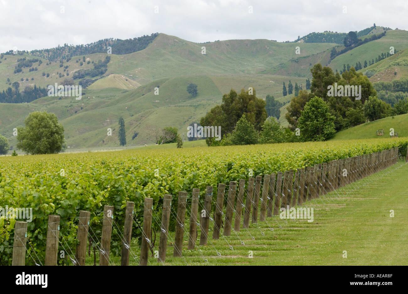 Wine production Hawkes Bay North Island New Zealand - Stock Image