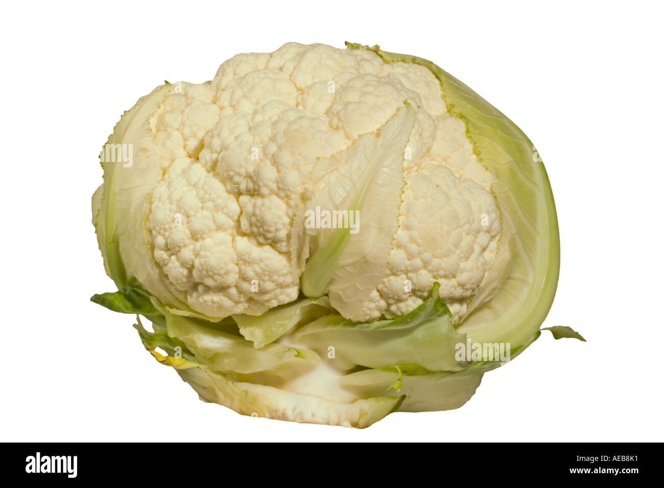Cauliflower, Tempera. Whole plant Surrey England - Stock Image