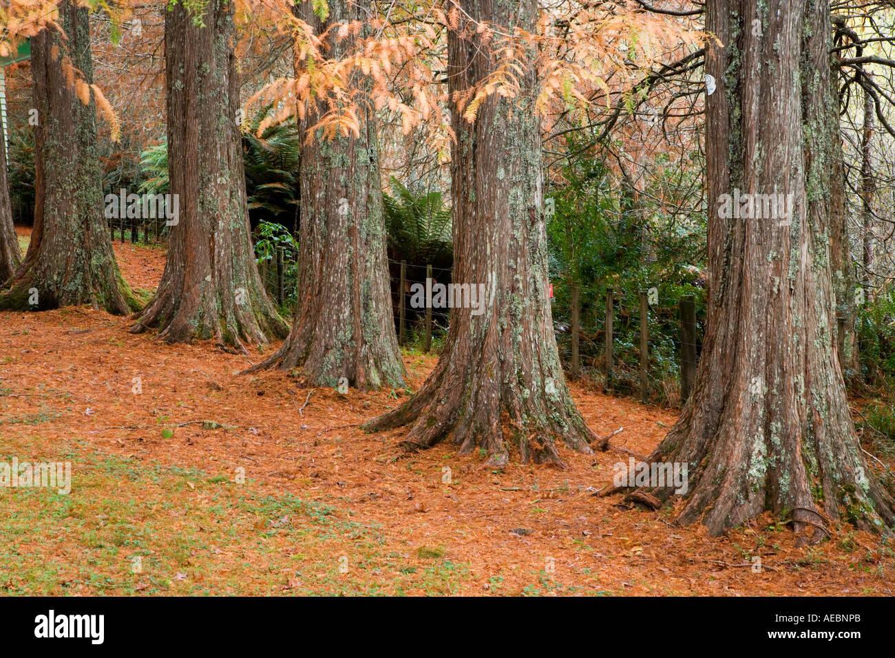 Te Wera Arboretum Forgotten World Highway Taranaki North Island New Zealand - Stock Image