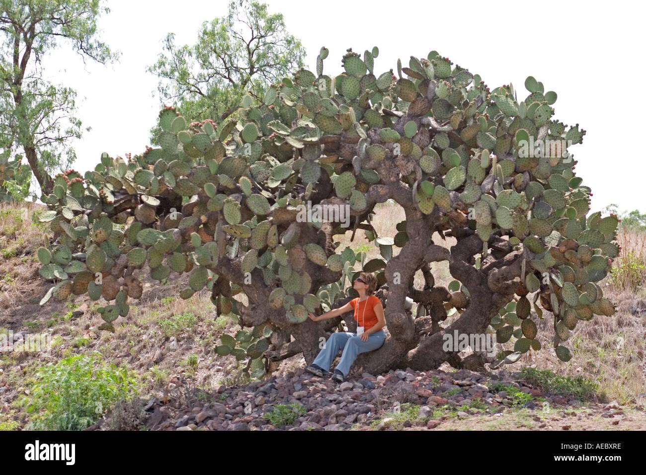 Tourist sat on a very tall prickly pear (Mexico). Touriste assise sur le tronc d'un très grand figuier de Barbarie Stock Photo