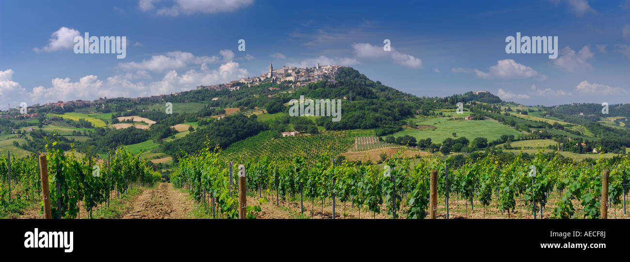 Panorama of rows of grape vines at vineyard and hilltop city of Todi in Umbria Italy - Stock Image