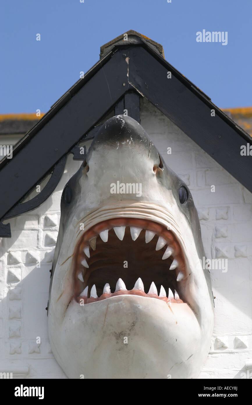 Shark Jaws Trophy Stock Photos & Shark Jaws Trophy Stock