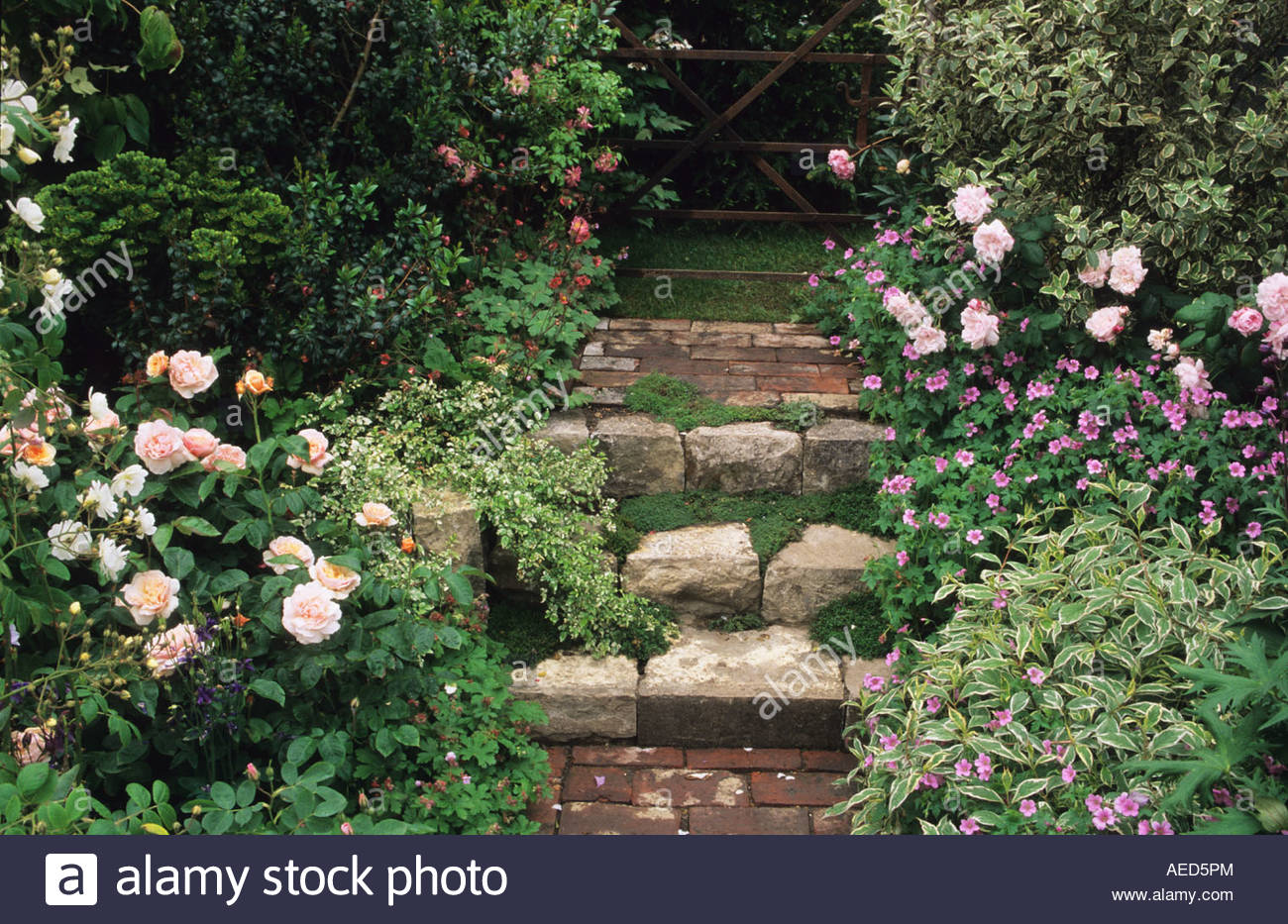 Shallow stone steps in cottage garden leading to garden gate with shallow stone steps in cottage garden leading to garden gate with roses design roger platt workwithnaturefo