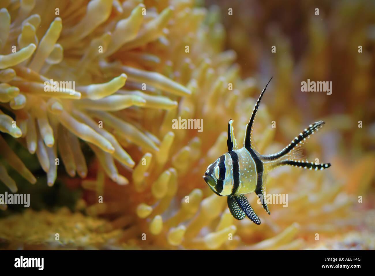 Exotic fish - Stock Image
