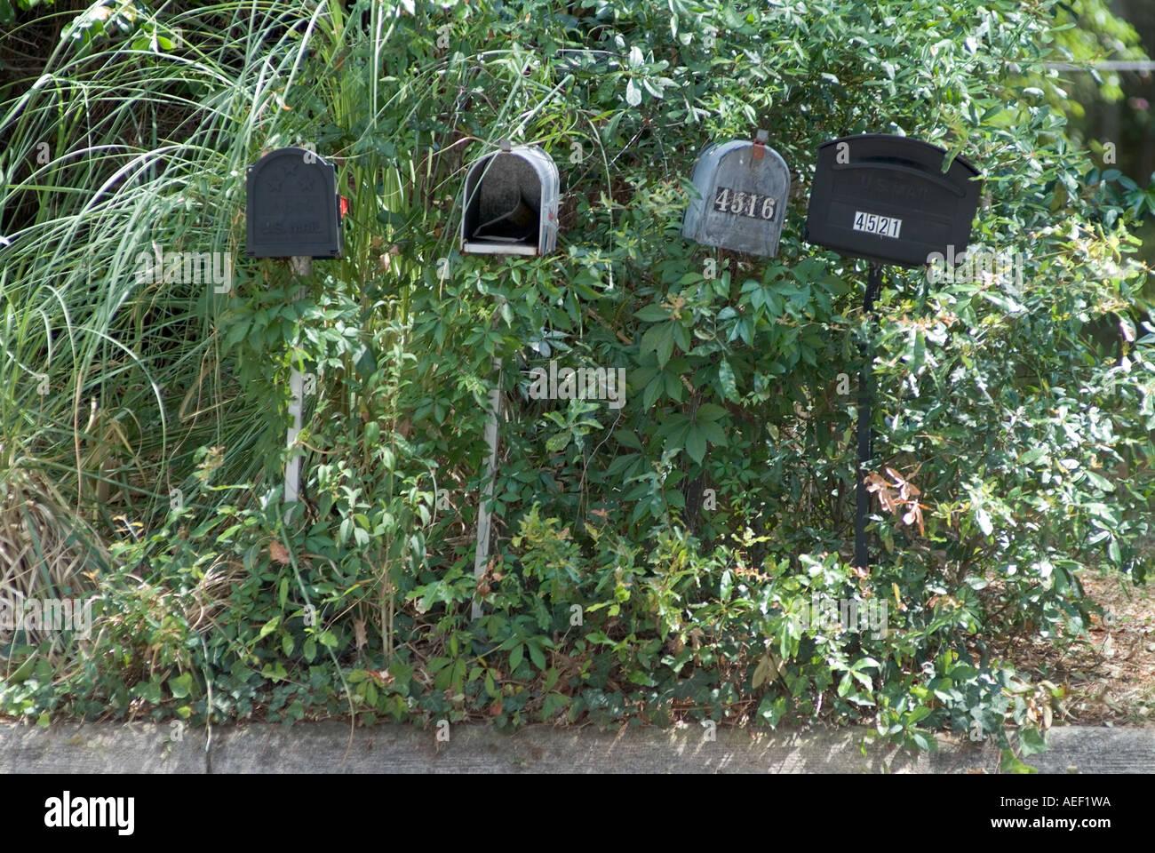 overgrown mailboxes postal drop mailbox - Stock Image