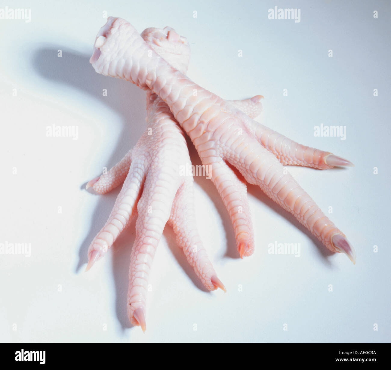 Food feet foot toes claw claws talon talons gross anatomy chicken chicken s nail stew paw paws wrinkled pale food meat - Stock Image