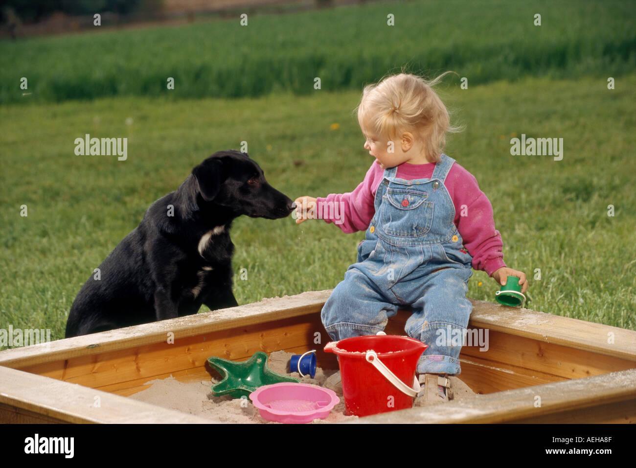 hybrid dog beside infant at sandbox - Stock Image