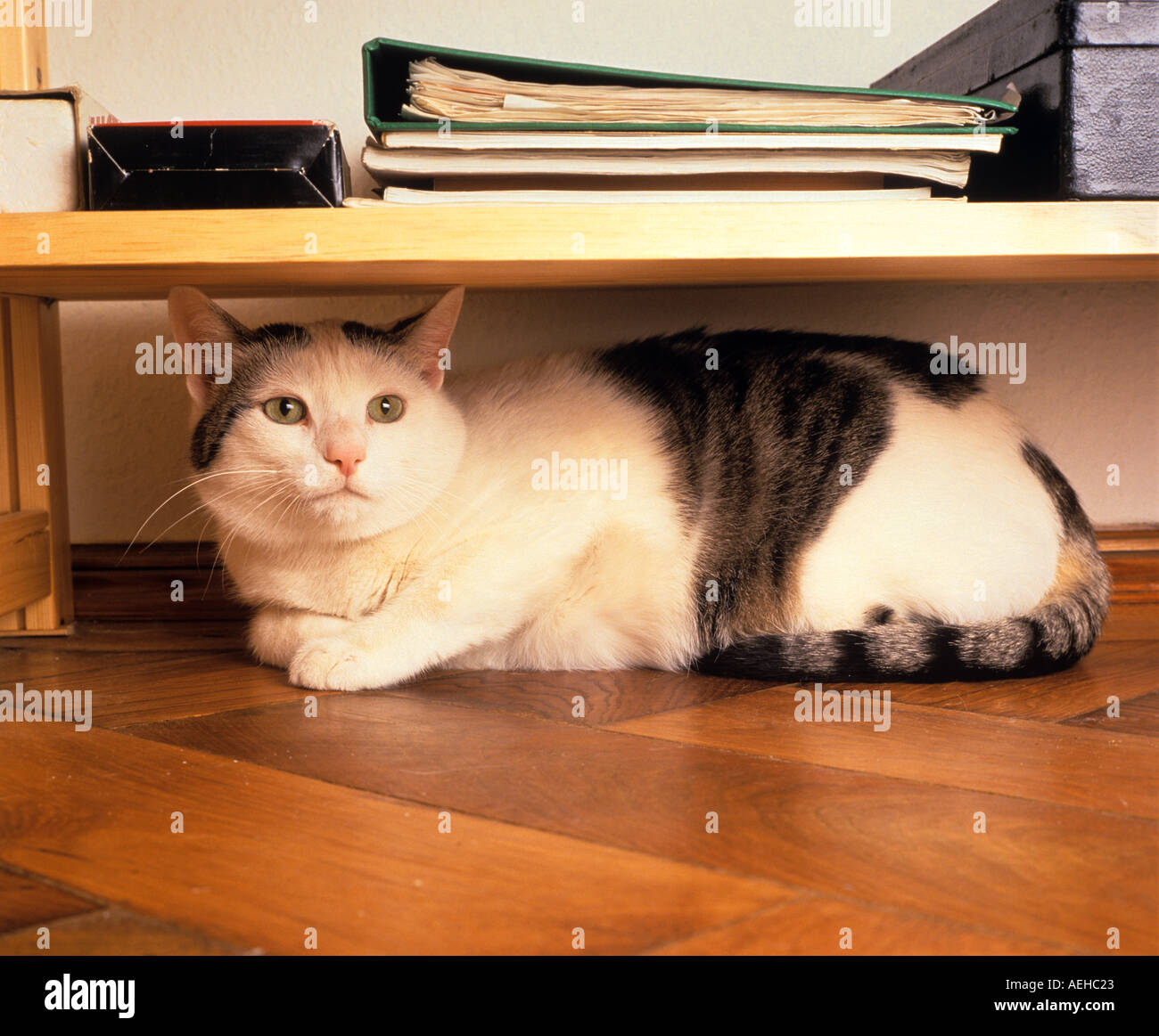 domestic cat fear - Stock Image