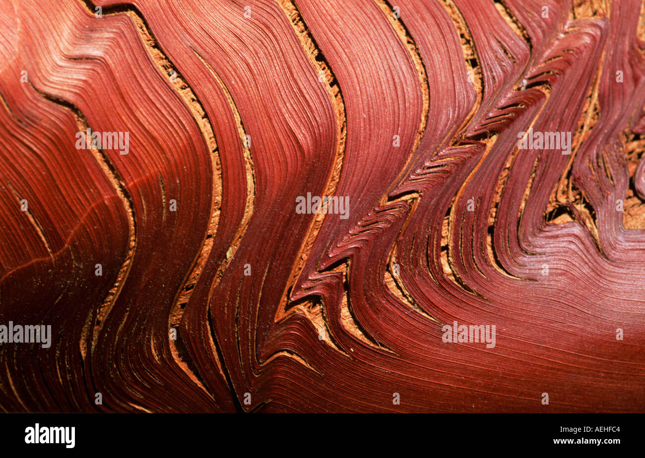 Bark of Palm tree. Warm red and brown tones, abstract image. - Stock Image
