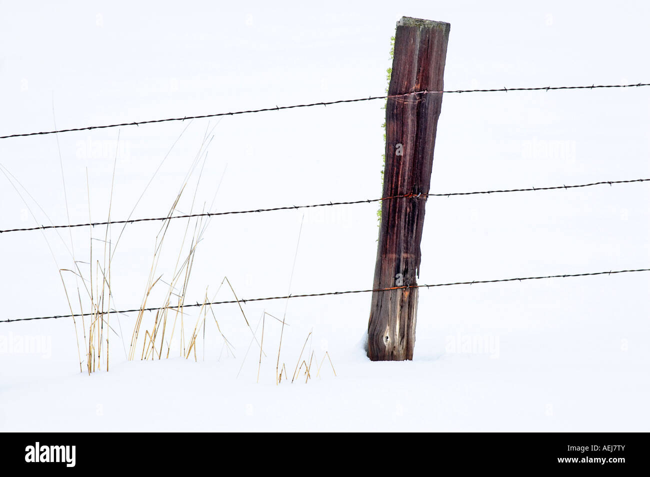 Barbed wire fence in snow with grass Elkhorn Scenic Byway Oregon - Stock Image