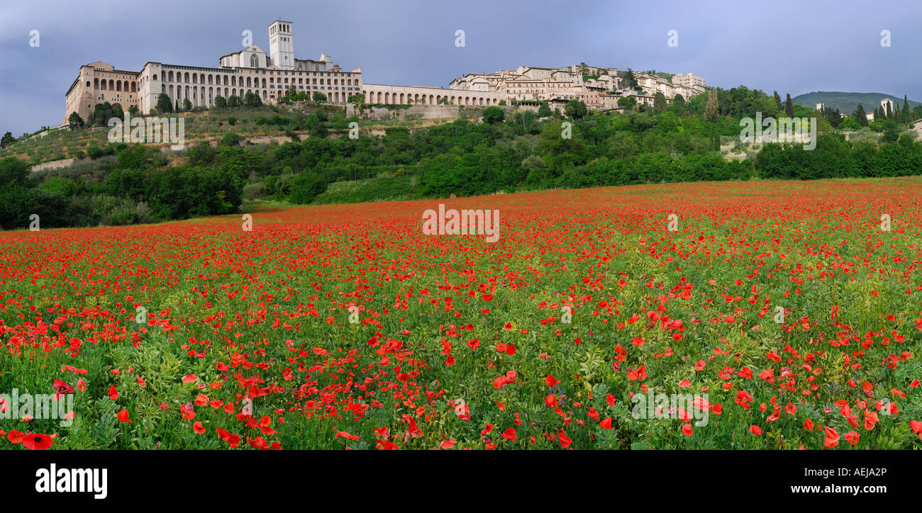 Panorama hilltop city of Assisi with wildflower poppies in Umbria Italy - Stock Image
