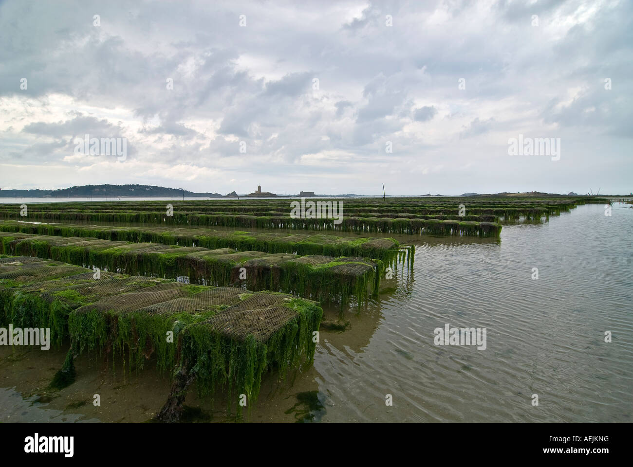 Oyster beds in the bay of Morlaix, Brittany, France Stock Photo